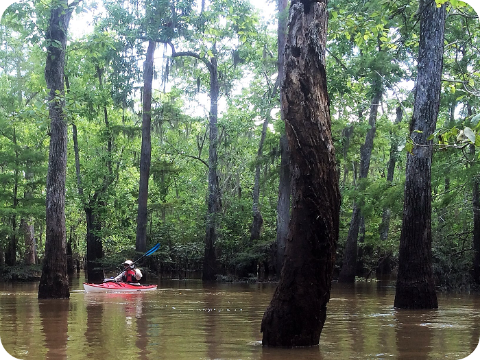 Neches River / Big Thicket Kayak Tour - Beaumont, Texas